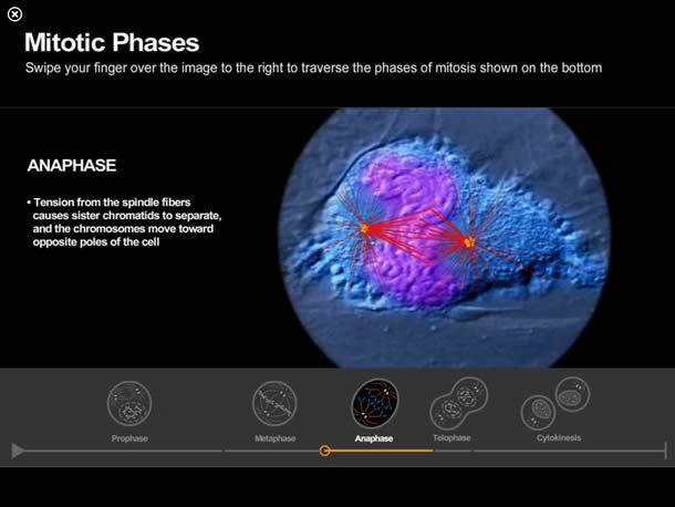 life-on-earth-grab-mitotic-phases-610w