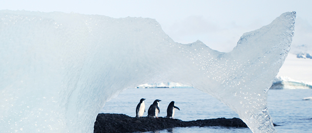 adelie-penguin-banner-ice-bridge-610x261