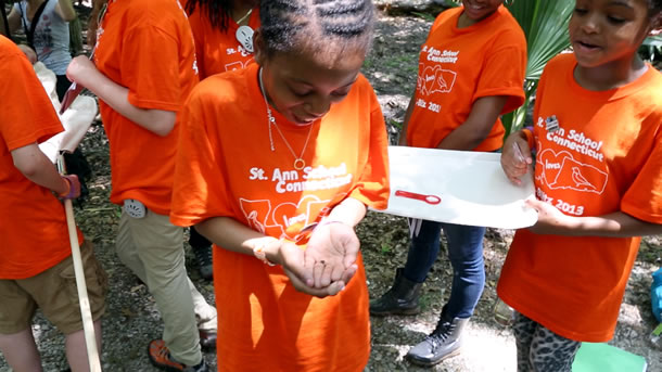 bioblitz-st-ann-insect-grab-from-video-610x343