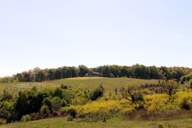 image of purchase knob from distance-640