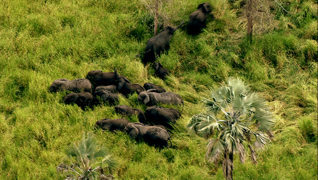 TylerC_002-elephants-in-grass
